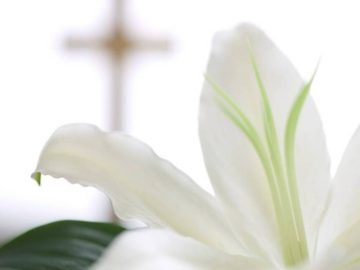 Easter Lilies for sale!